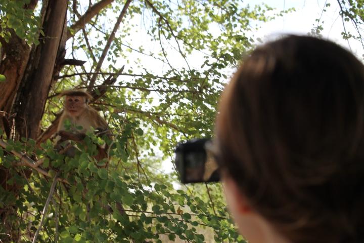 Safari vlog